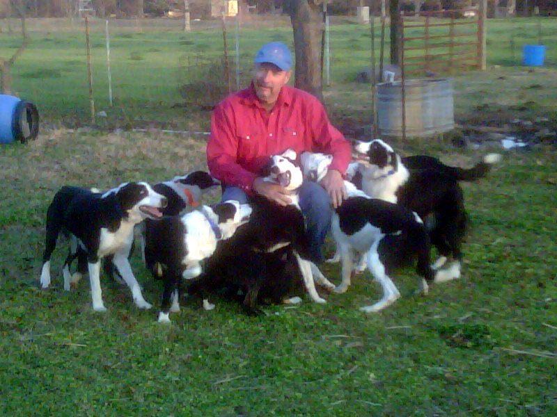 My Herding Dogs.jpg