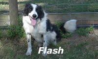 flash09.jpg